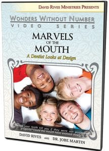 The Design of the Human Mouth